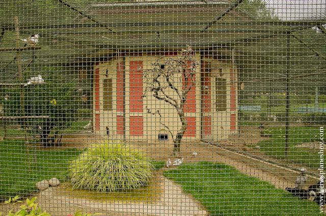 Parque Thabor aviario Rennes Bretaña viaje turismo