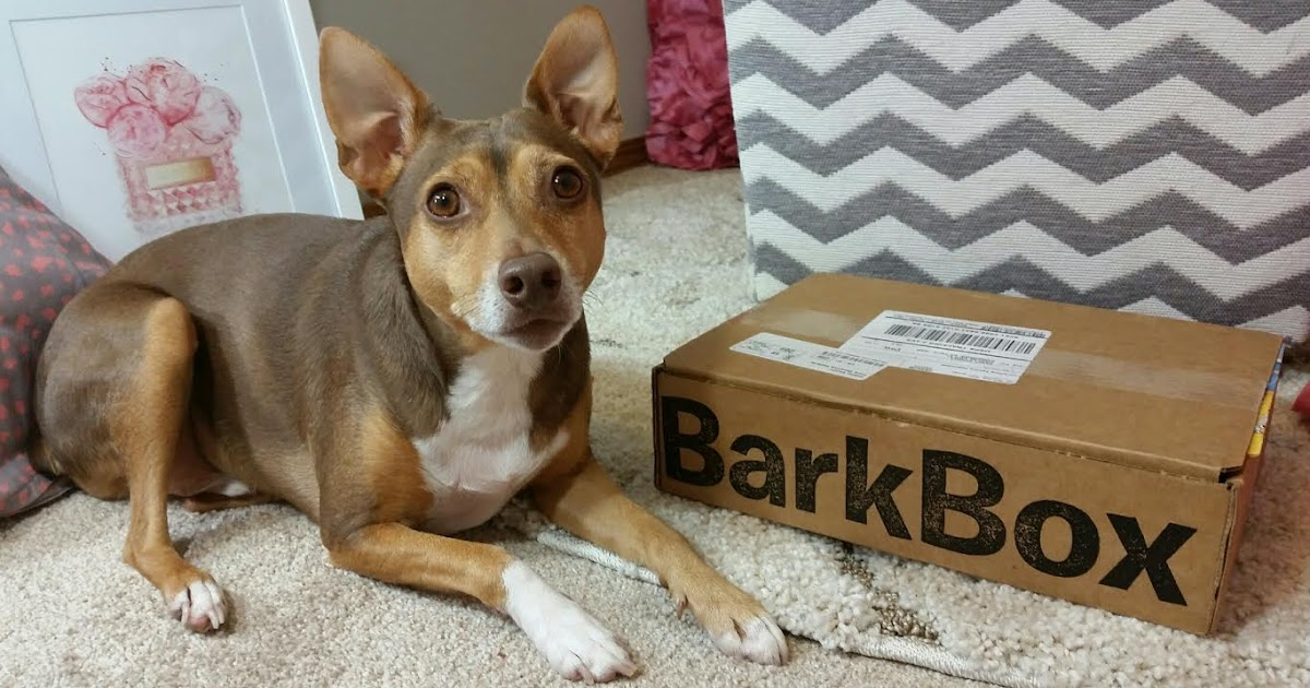 Barkbox Small Dog Subscription Box Review August 2016 Plus