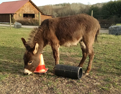 miniature donkey and field toys