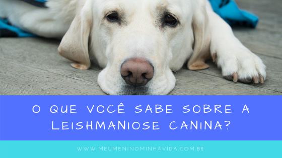 o que voce sabe sobre a leishmaniose canina
