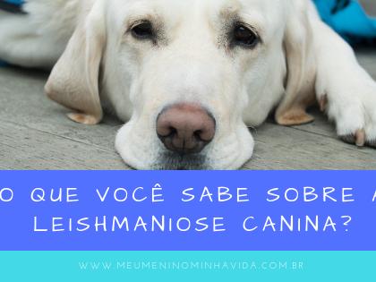 O que você sabe sobre a Leishmaniose Canina?