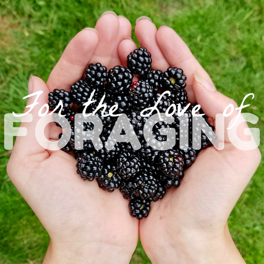 "two hands cupping a portion of blackberries, the words ""for the love of foraging"" superimposed onto the photo"