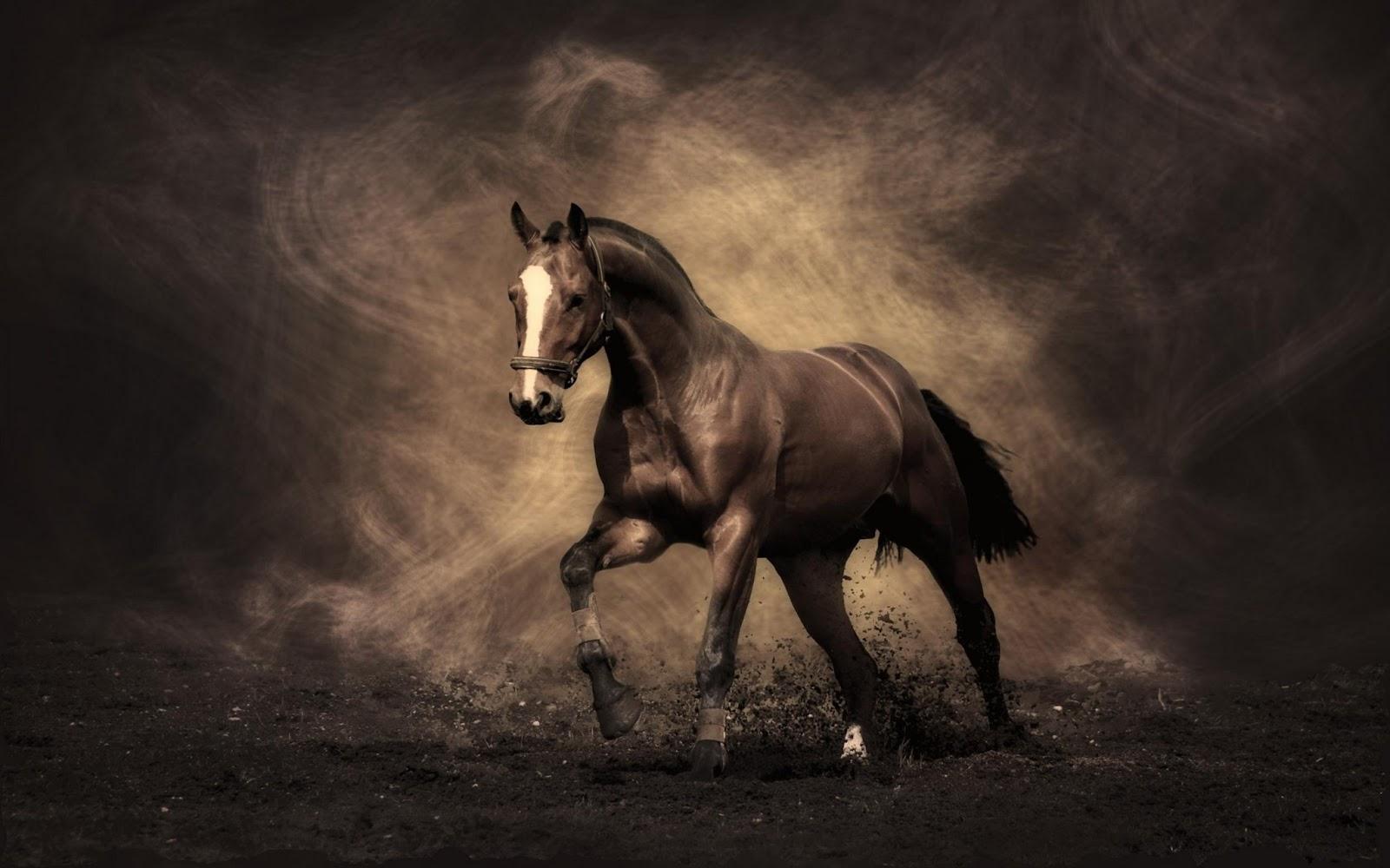 Fantastic   Wallpaper Horse Water - horse-+(7)  Pic_452392.jpg