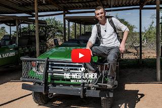 Walking Safari in Balule Game Reserve, Kruger National Park, Afrika, Weltreise