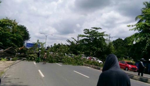 Sebuah pohon besar tumbang di Jl A Yani Km21 tak jauh dari markas Kompi Senapan A di Liang Anggang, Landasan Ulin Barat, Kota Banjarbaru, Kamis 23 Maret 2017 sekira pukul 11.50 Wita.