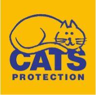 cats, feline