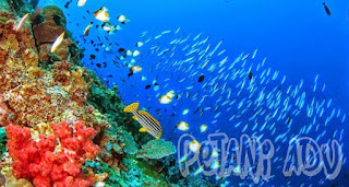 5 Wisata Alam Bawah Laut yang Paling Eksotis || petaniadv