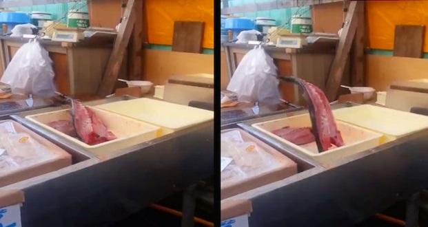 Video: Netizen terkejut ikan tinggal isi masih mampu meloncat. Seram pun ada!