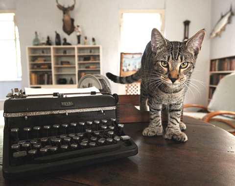 six toed Hemingway cat