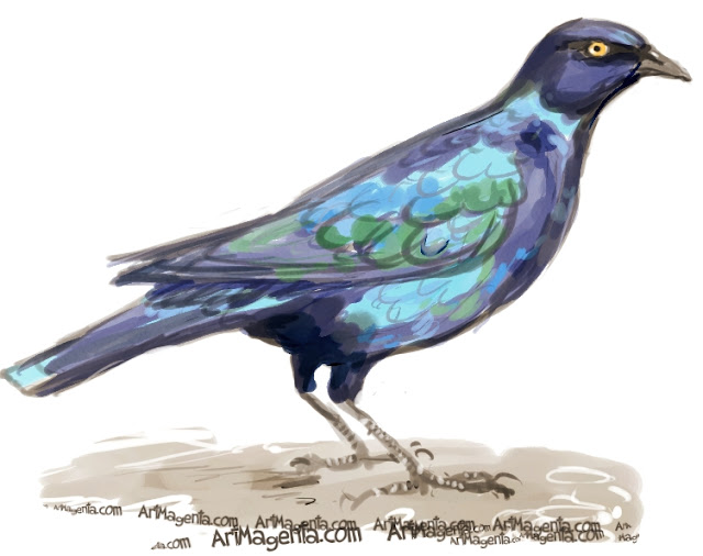 Cape Starling sketch painting. Bird art drawing by illustrator Artmagenta