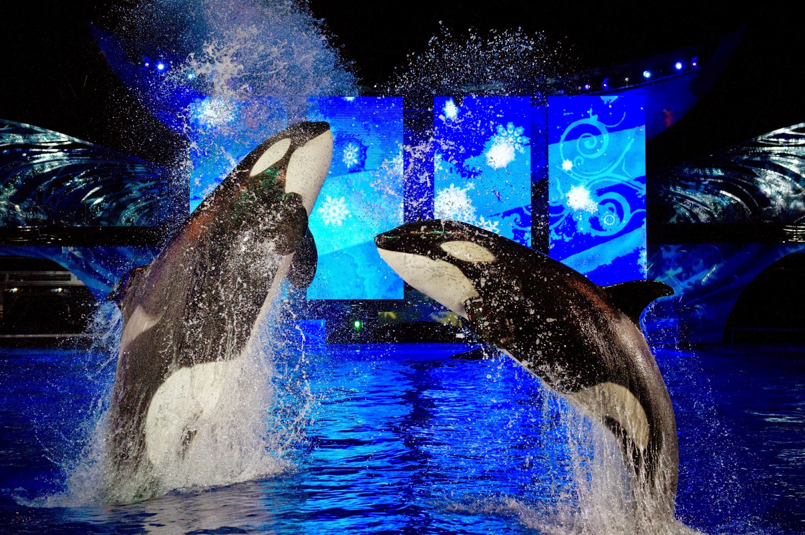 Show no parque Seaworld