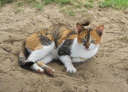 Palawan beach cat