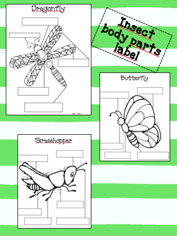 first grade dual insect body parts label. Black Bedroom Furniture Sets. Home Design Ideas