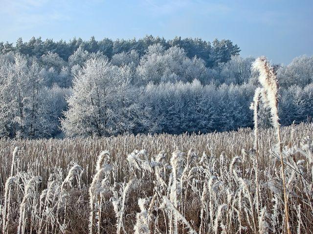 zimowe krajobrazy, szron, rośliny, drzewa