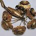 Химичен анализ слага край на дебатите за произхода на златно съкровище отпреди 2700 години