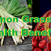 Lemon Grass Has 10 Health Benefits That Will Surely Give You A Relief!