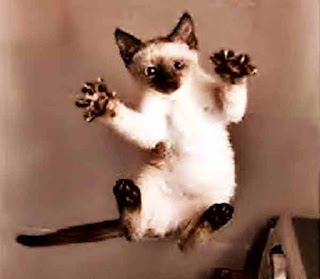 I am kung fu cat