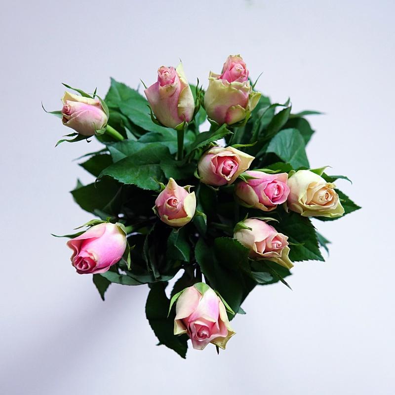 Ruusut, kukkakuva