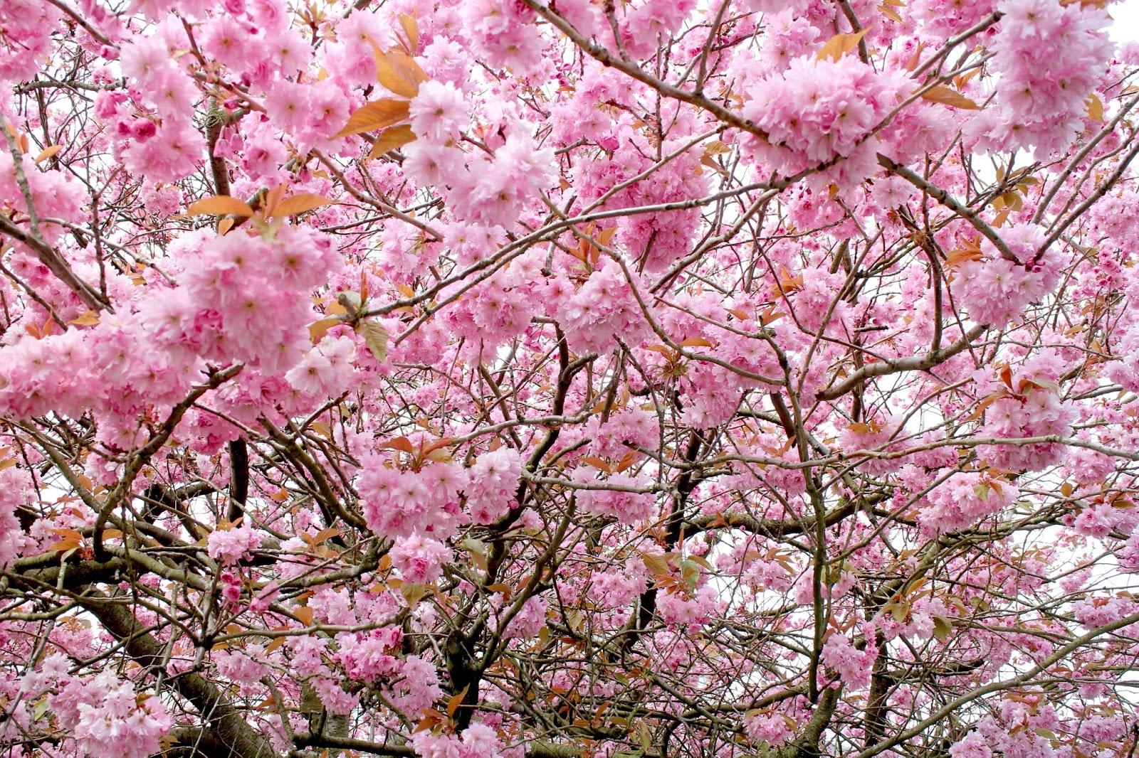 Blossom Scotland