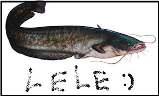 Cara Ternak Ikan Lele yang menguntungkan