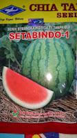 buah besar, daging merah, buah bulat, semangka non biji, semangka Setabindo, Cap Kapal Terbang, Harga Murah