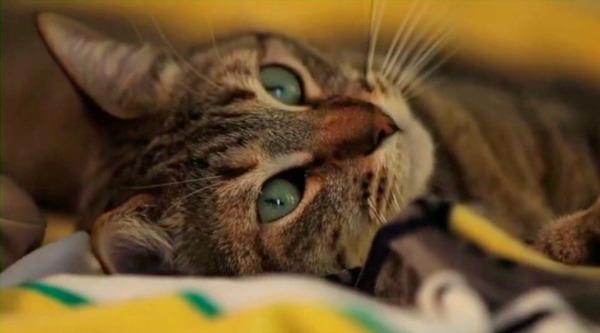 leonard cat