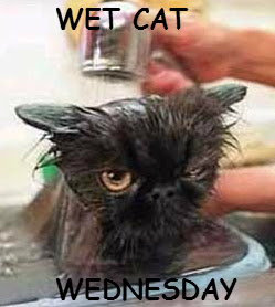 Can We Have A New Witch Ours Melted Wet Cat Wednesday