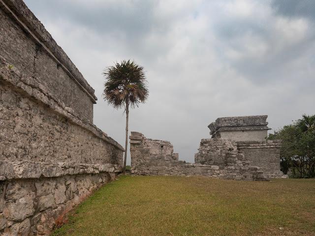 Ruinas mayas en Tulum con palmera