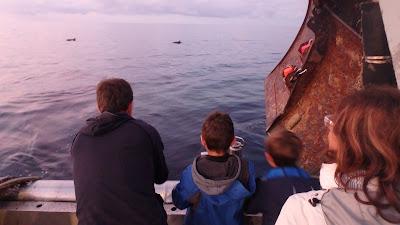 Pescaturismomallorca Los delfines saltan y nadan alrededor del barco