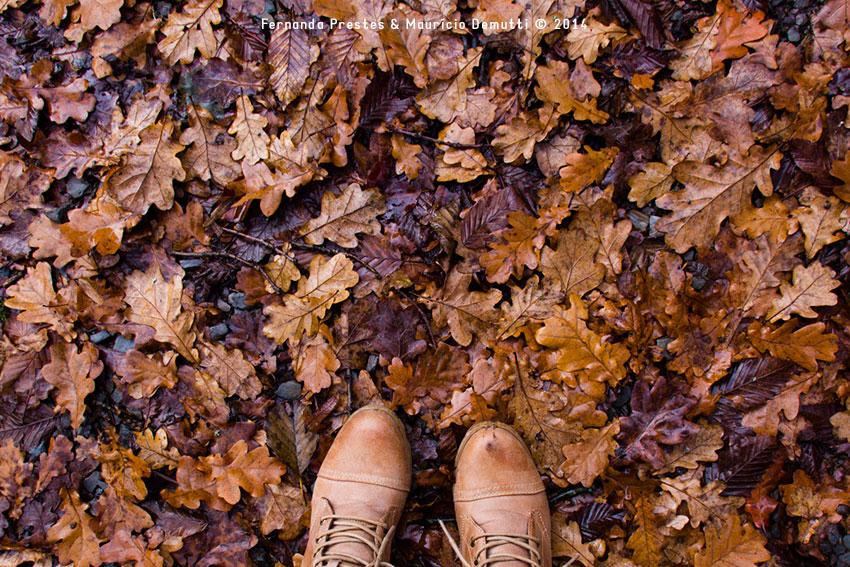 folhas de outono no chão