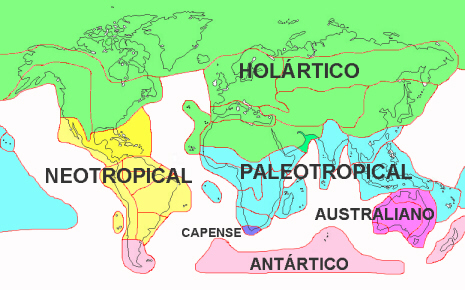 Reino Paleotropical (Paleotropis)