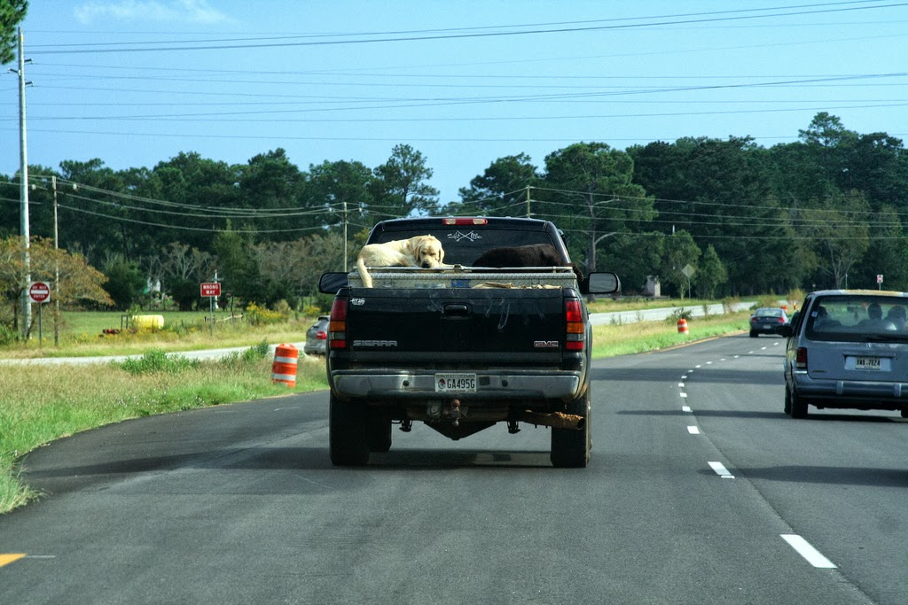 how to transport a dog in a truck bed