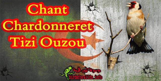 تغريد حسون تيزي وزو الجزائر كاملا Chant Chardonneret Tizi Ouzou