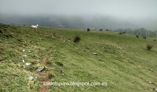 caballos-salvajes-asturias