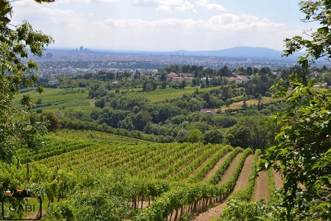 Kahlenberg - odsiecz wiedeńska i winorośle