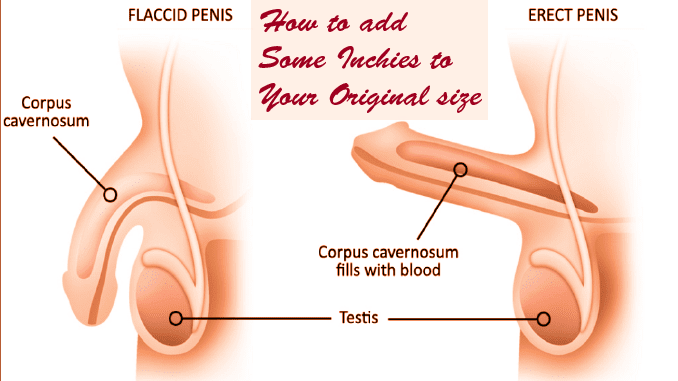 How to increase your penile size naturally