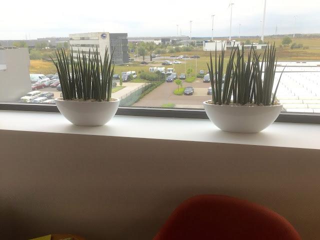 Plantenverhuur voor bedrijven. Planten op muur kast plafond wand landschapskantoor of inkomhal. prijzen kantoorbeplanting op aanvraag