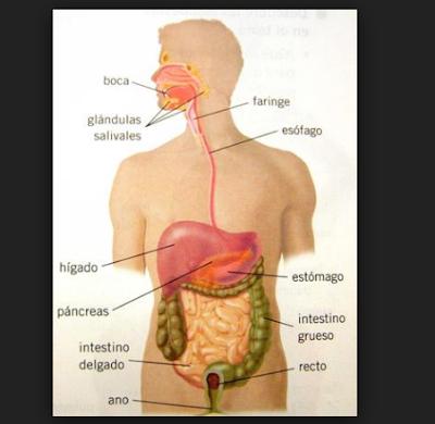 partes del cuerpo humano y los sentidos