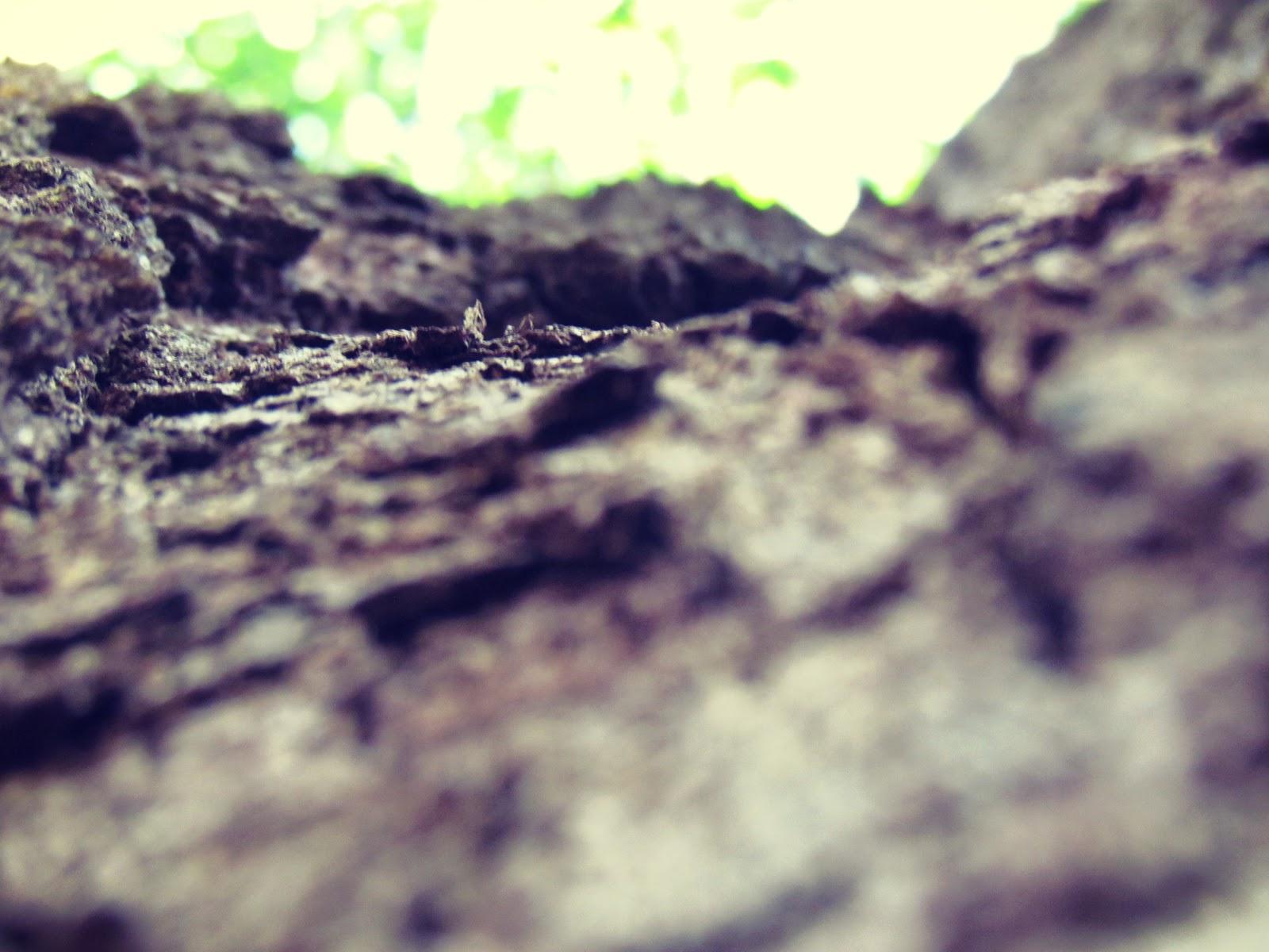 Friends of Hammock Park Wildlife Tree Bark Tree Hugger Mantra