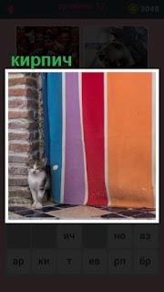 кошка сидит рядом с кирпичной стеной около входа