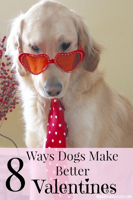 Valentines Day for Dogs golden daily scoop
