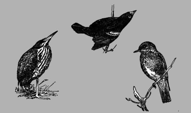 Darstellung verschiedener Vögel