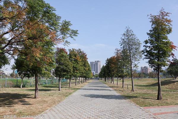《台中.北屯》南興公園|萬坪公園|落羽松大道|米老鼠樹|生態滯洪池|滑溜冰場|籃球場