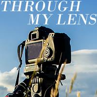 https://mersad-photography.blogspot.com/search/label/throughmylens