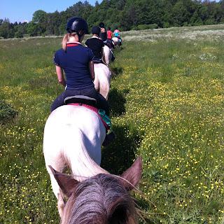 Viro, Muhu, ratsastusmatka, riitta reissaa