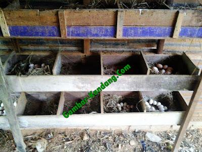 Tempat Bertelur Ayam Kampung bahan kayu