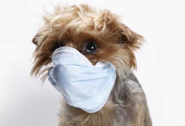 Chó bị kém sức khỏe
