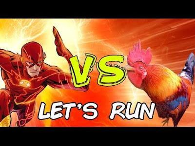 Wild Rooster Run apk