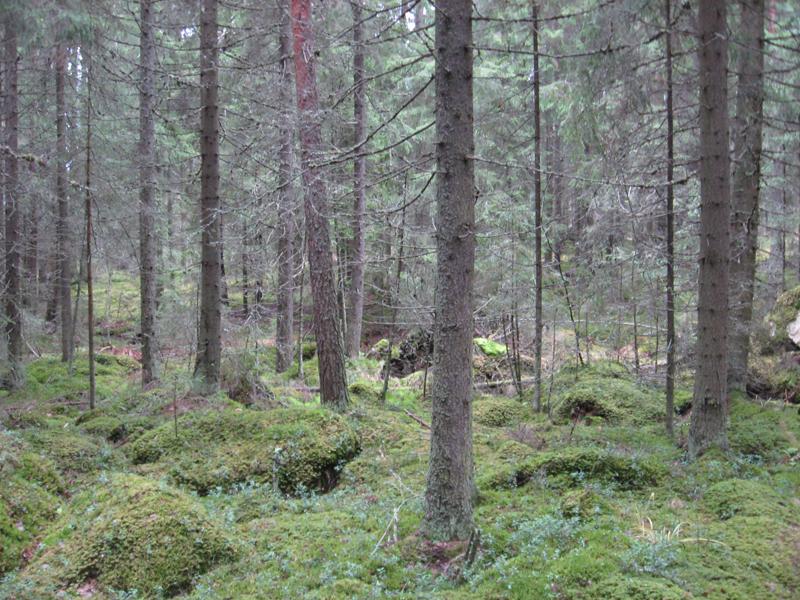 Lempaalan Pirunlinna Kansanperinne Blogi