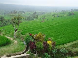 Panorama Alam, sawah di jatiluwih